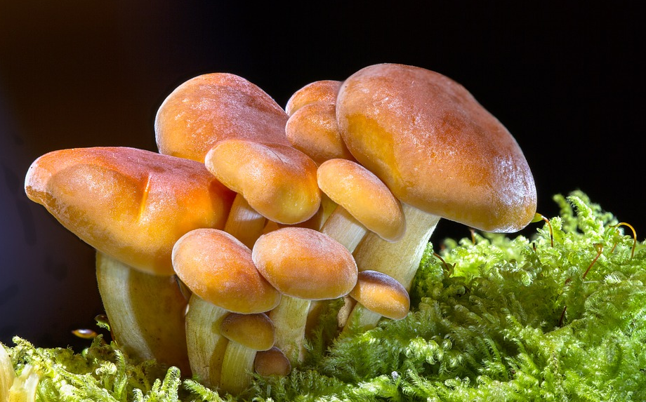 Introduction To The Medicinal Benefits Offered Through Shrooms Online